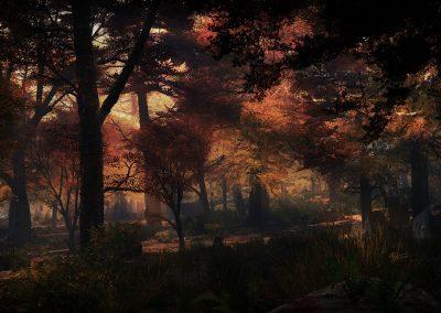 Landscape; Forest; Autumn; Godrays; Evening; Atmosphere