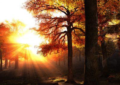Landscape; Forest; Autumn; Evening; Godrays