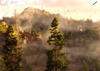 Landscape; Forest; Birds; Evening; Sundown; Haze; Mist