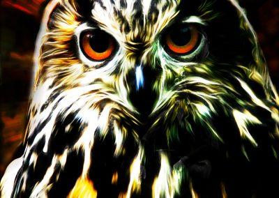 PS CS3 Image Editing; Eagle Owl; Oilpaint