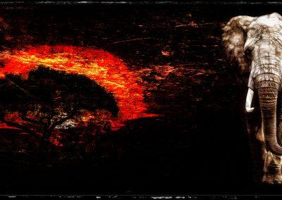 Abstrakt; Elephant; Grunge; Stonetexture; Acacia; Africa; Sun