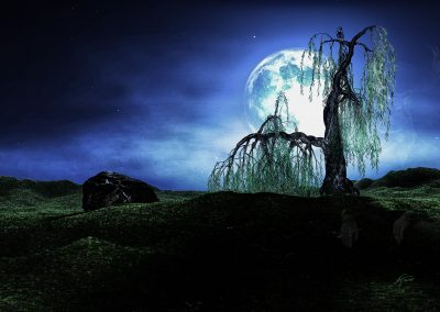 Landscape; Night; Fullmoon; Willow; Owl