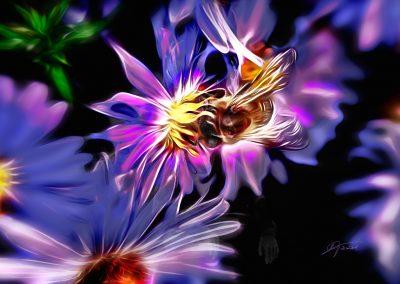 PS CS3 Image Editing; Honey Bee; Flower; Soft, Smudgepainting