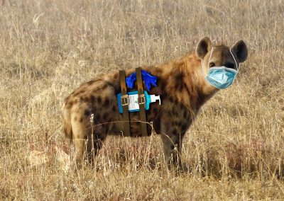 Composing; Hyena; Hygienic; OP - Mask; Desinfection