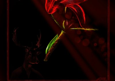 PS CS3 Image Editing; Red Lily; Flower; Soft; Light; Bokeh
