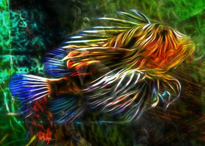 Composing; Lionfish; Glowing; Colourful