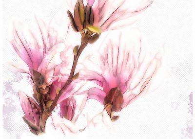 PS CS3 Image Editing; Magnolia; Soft; Grunge
