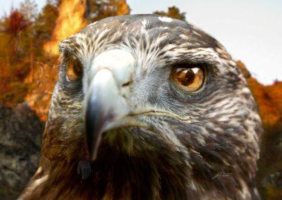 Composing; Eagle; Eyes; Mirror