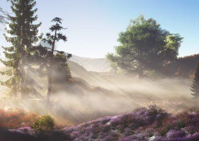 Landscape; Lavenderfield; Morningtime; Morningmist