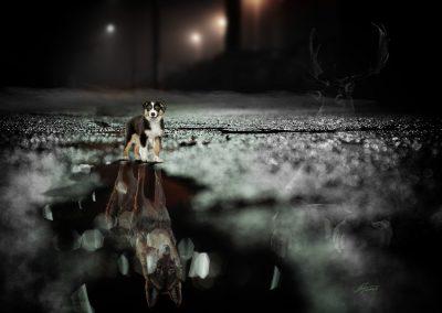 Composing; Australian Shepard Puppie; Self - Confidence; Wolf; Reflection