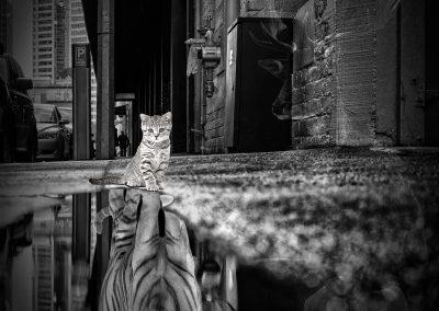 Composing; Kitten; Self - Confidence; Tiger; Reflection