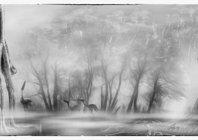 Composing; Primeval; Fog; Black & White