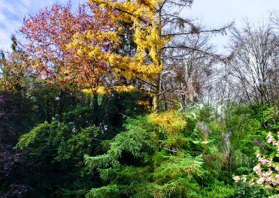 PS CS3 Image Editing; Nature; Tree; Seasons; Winter; Spring; Summer; Autumn