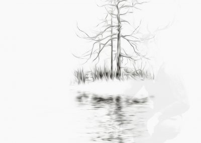 Image Ediding; Larch; Pencil - Drawing - Effect; Outline