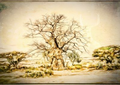 Image Ediding; Baobab Tree; Pencil - Drawing - Effect; Comic - Style; Outline