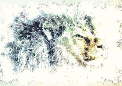 Image Ediding; Lion; Pencil - Drawing - Effect; Outline