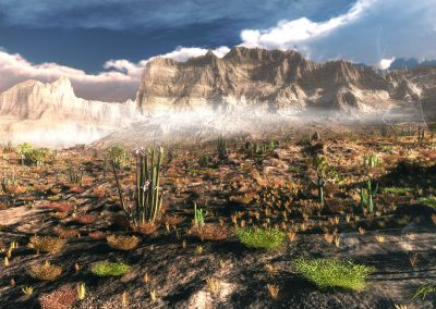 Landscape; Desert; Heat; Dust; Haze; Cactus