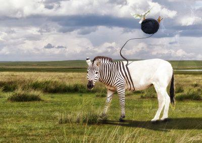 Composing; Zebra; Grassland; Birds; Wool