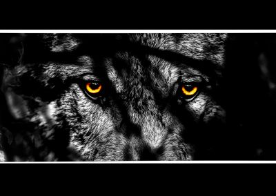 Composing; Wolf; Eyes; Fullmoon; Branch