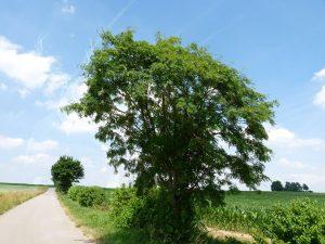 MWD 6; Contest; Tree; Dirt Road; Corn Field