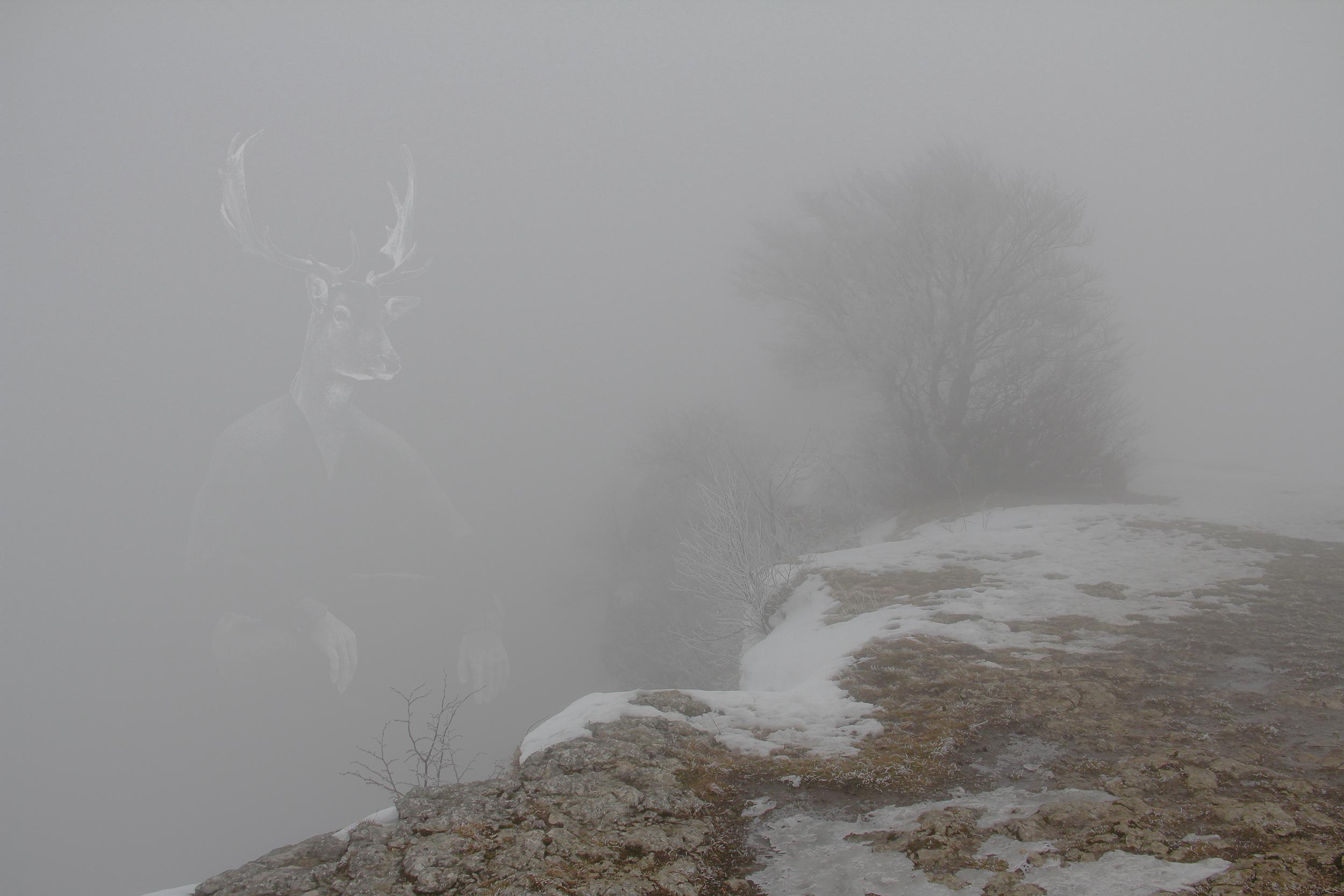 MWD 71; Contest; Cliff in the fog;