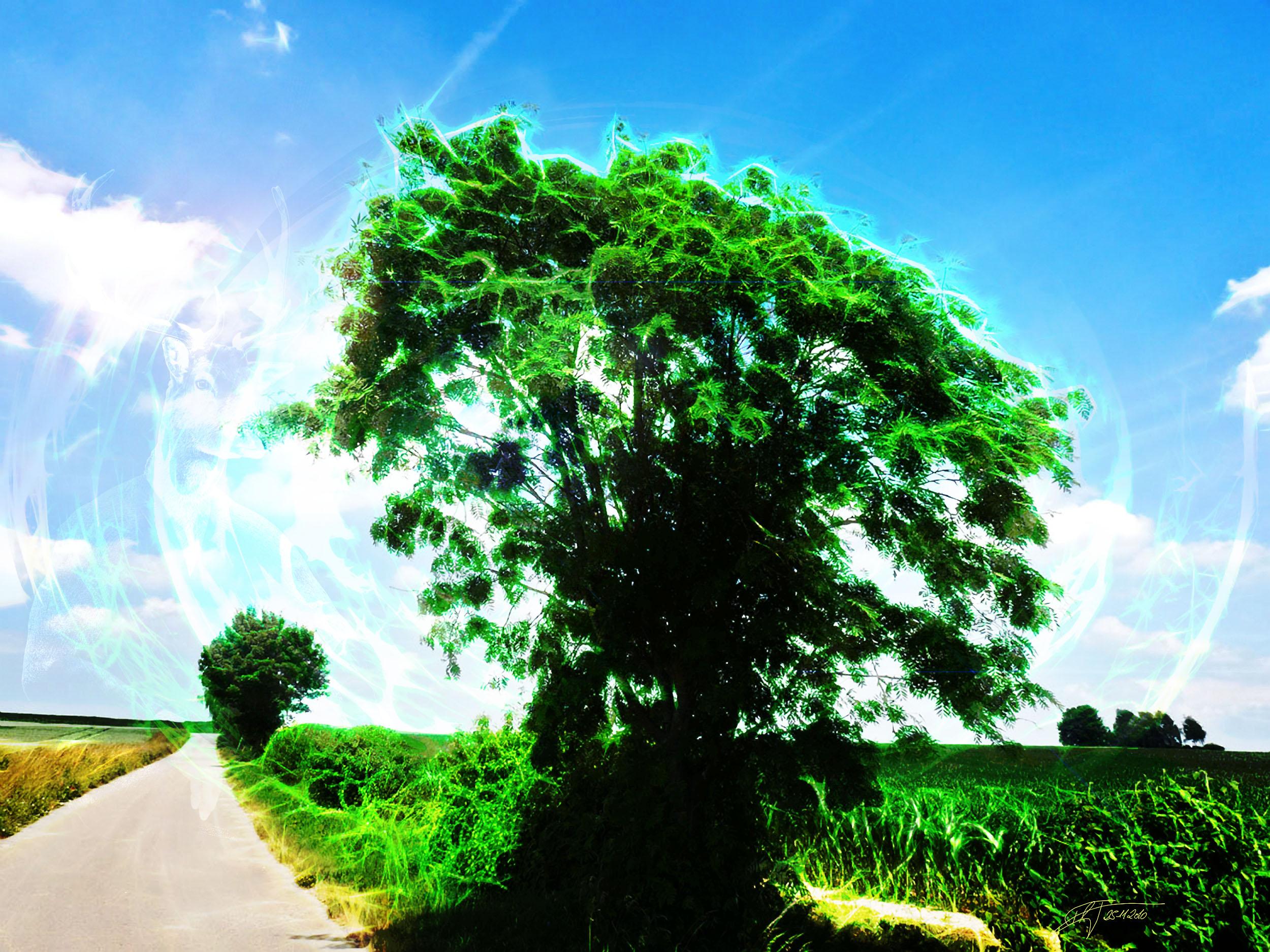 MWD 6; Contest; Tree; Dream; Soft; Sherical