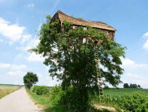 MWD 6; Contest; Tree; Treehouse
