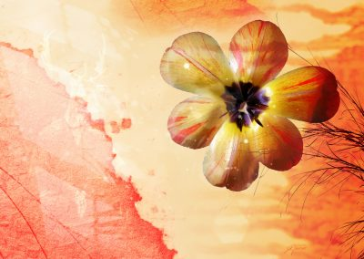Sparaxis tricolor; Magic Flower; Warm Colours; Brushes