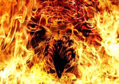 DarkArt; Fire; Flames; Hot; Face; Owl